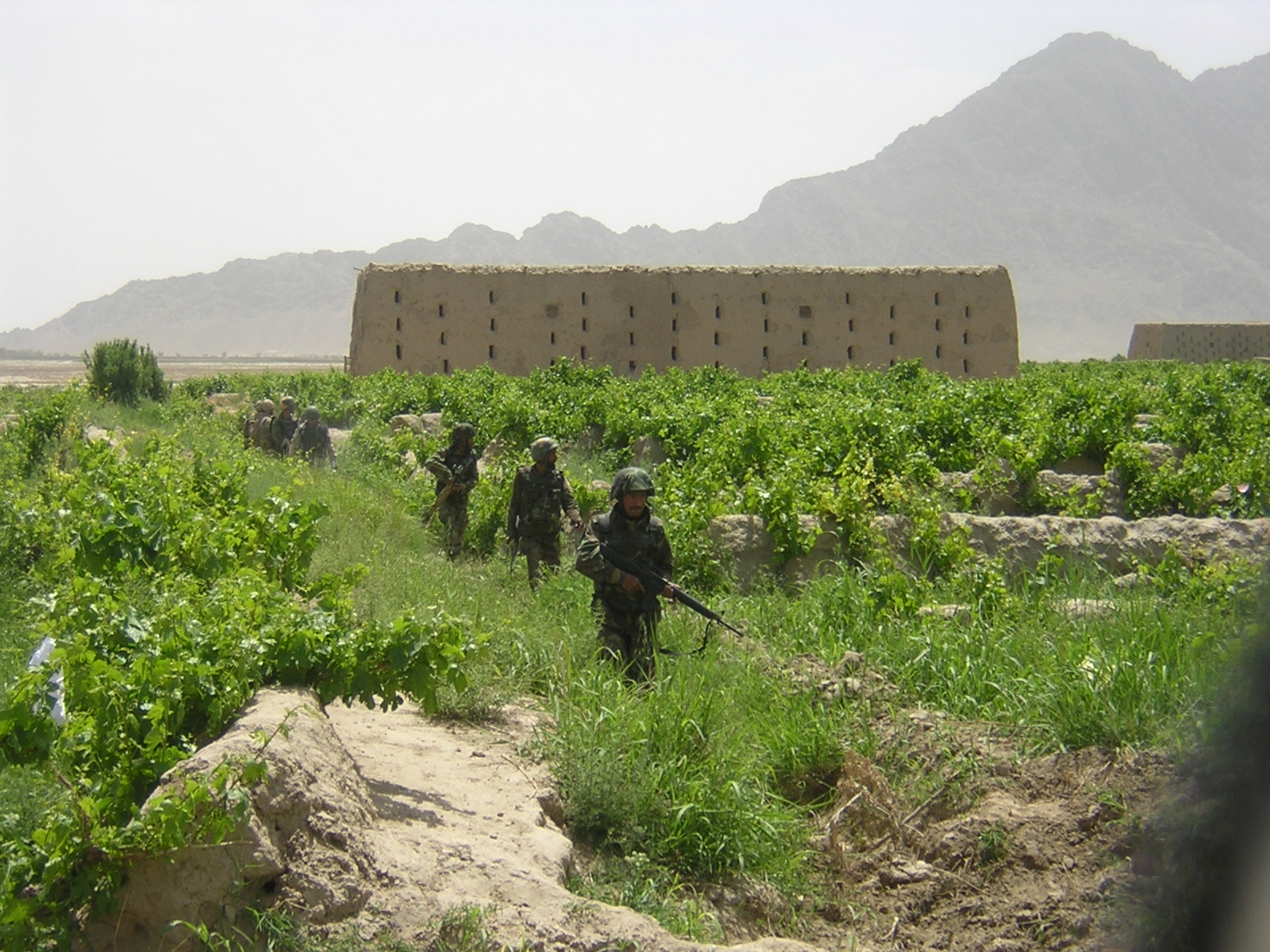 OMLT and ANA make their way back to the road after dislodging Insurgents from Grape Drying Hut. 15 Apr 2008.